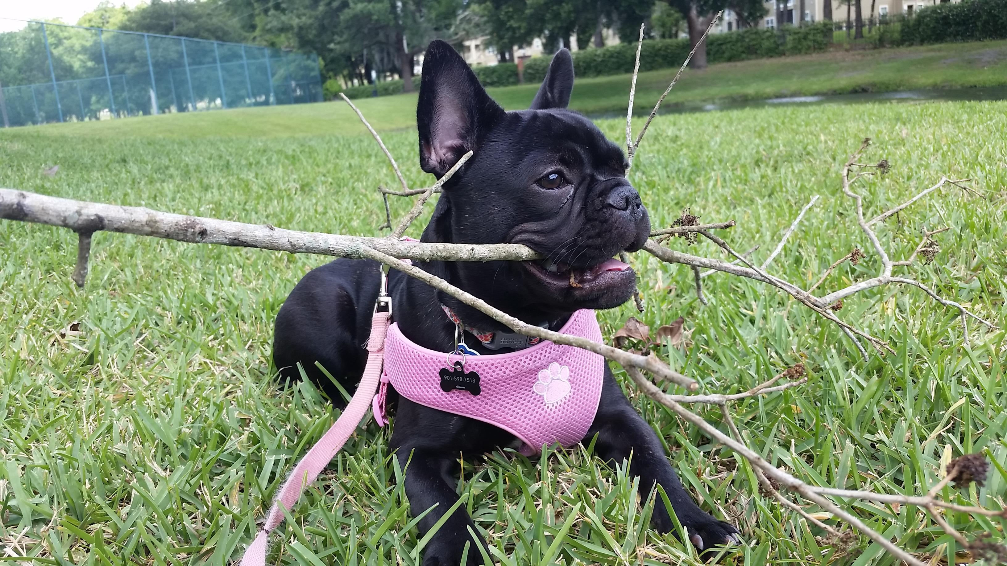 Pet Sitting Lakeland - The Pet Nanny Lakeland