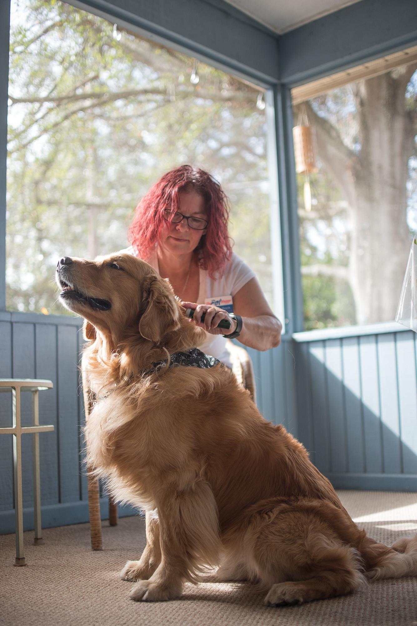 FAQ - The Pet Nanny Lakeland - Gina Bullock - Pet Sitter